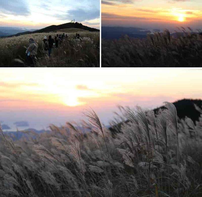 西の丘のススキの草原と夕日です。