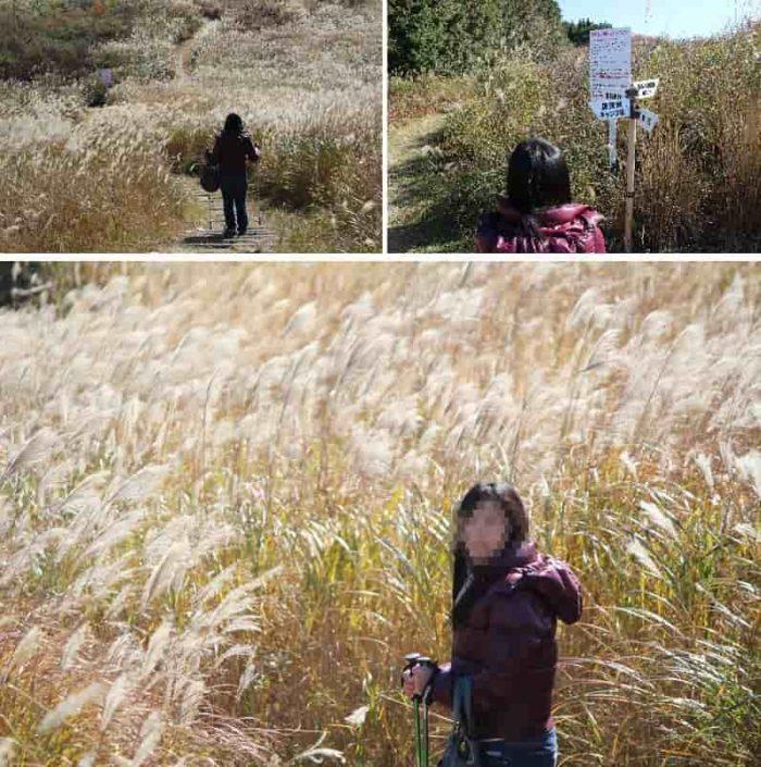 『ススキの大草原』です。
