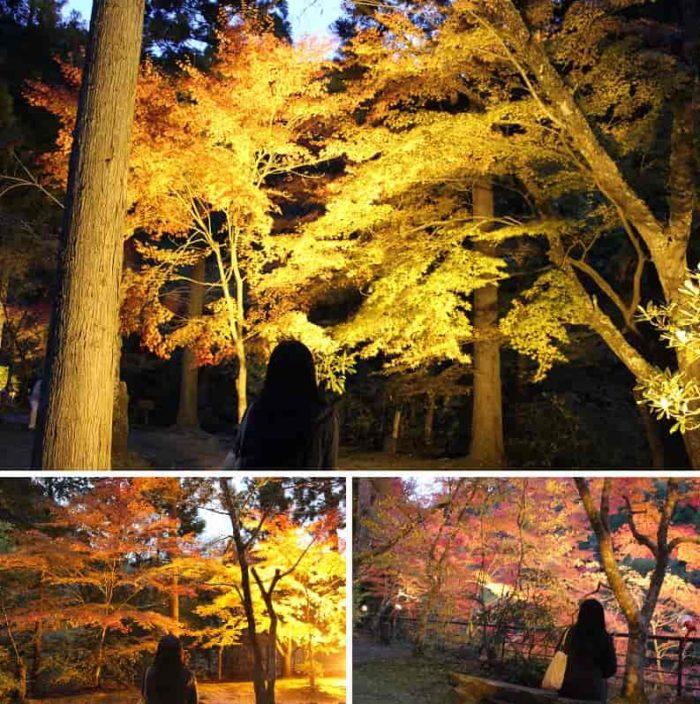 奥津渓の紅葉のライトアップです。