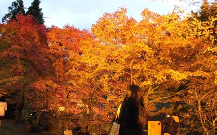 奥津渓で望む紅葉のライトアップです。