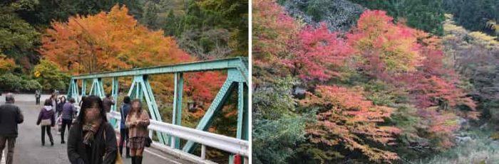 大釣橋の周辺の紅葉の景色です。