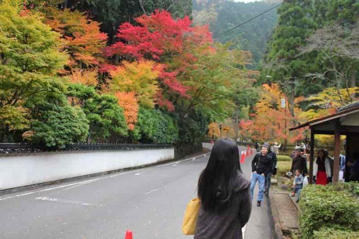 色とりどりの紅葉の景色です。