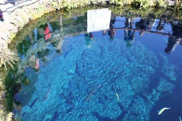 神秘的な光景が広がる『中池』です。