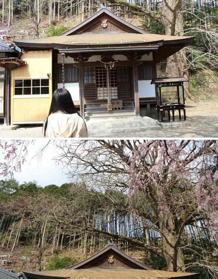奈良県内で最大級の大きさを誇ります。