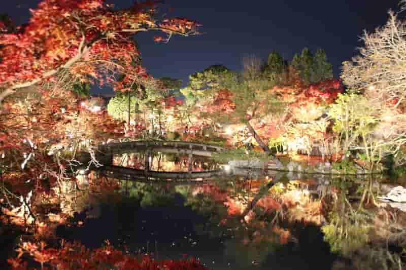 水鏡に映る紅葉のライトアップです。