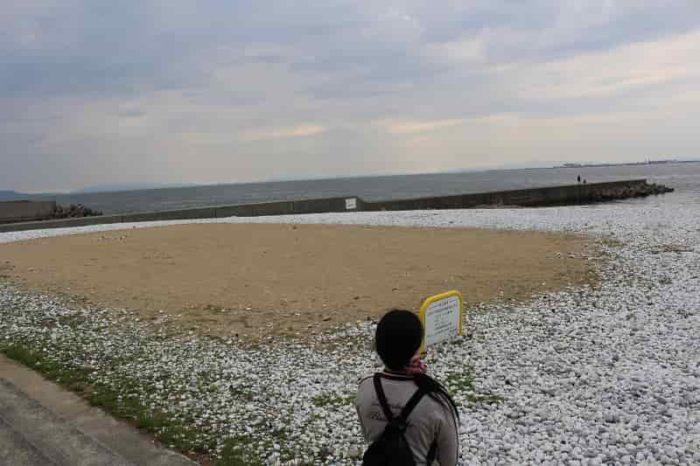 走り回れそうな砂浜です。