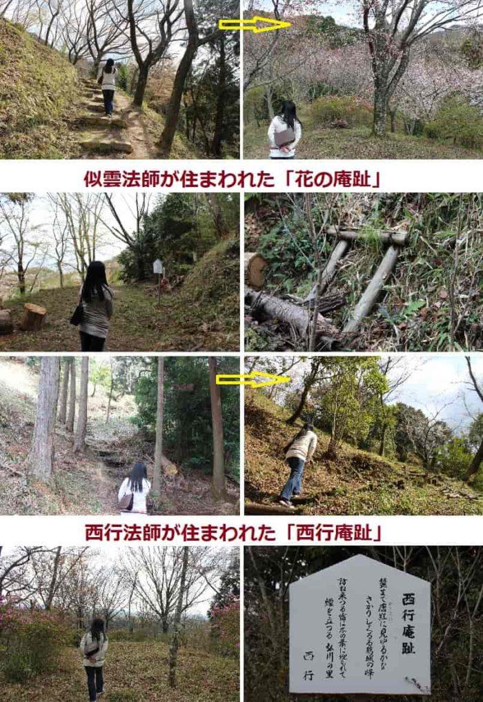 桜山遊歩道の見どころです。