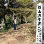 桜山遊歩道の様子です。