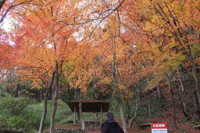 もみじ谷に色付きを魅せる紅葉です。