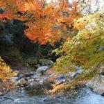 摂津峡公園の渓谷沿いの紅葉です。