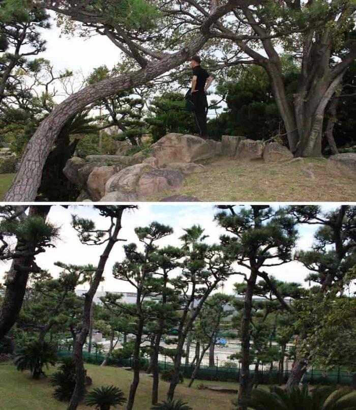 蘇鉄山より望む景色です。