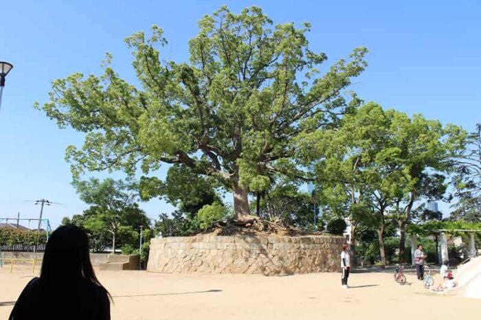聖天山公園にある聖天山古墳です。