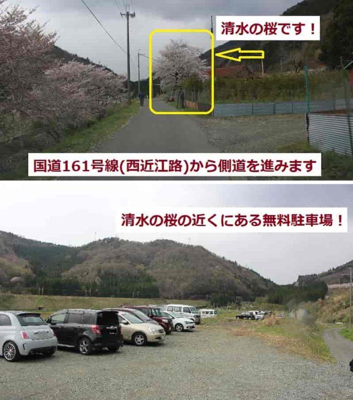清水の桜の傍にある無料駐車場です。