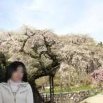 権現様のお告げを受けて植えらた桜です。