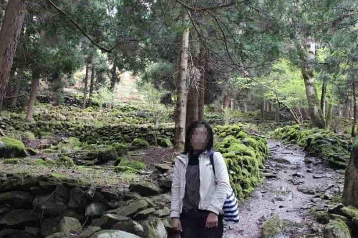 苔むした大自然の残る森です。
