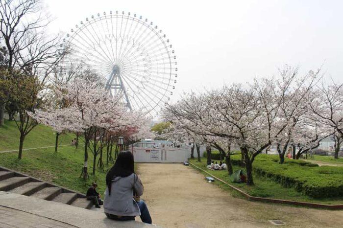 天保山公園に咲き誇る桜です。