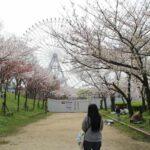 天保山公園に立ち並ぶ桜の木々です。