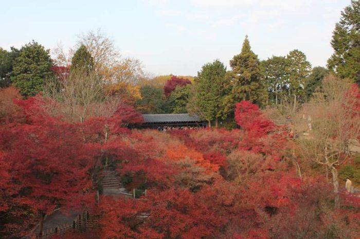 通天橋より眺められる紅葉の景色です。