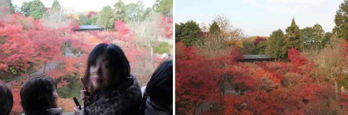 通天橋から眺めた紅葉の景色です。