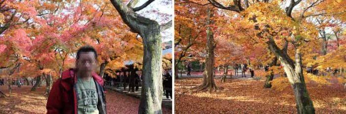 京都随一と呼び声が高い紅葉の景色です。