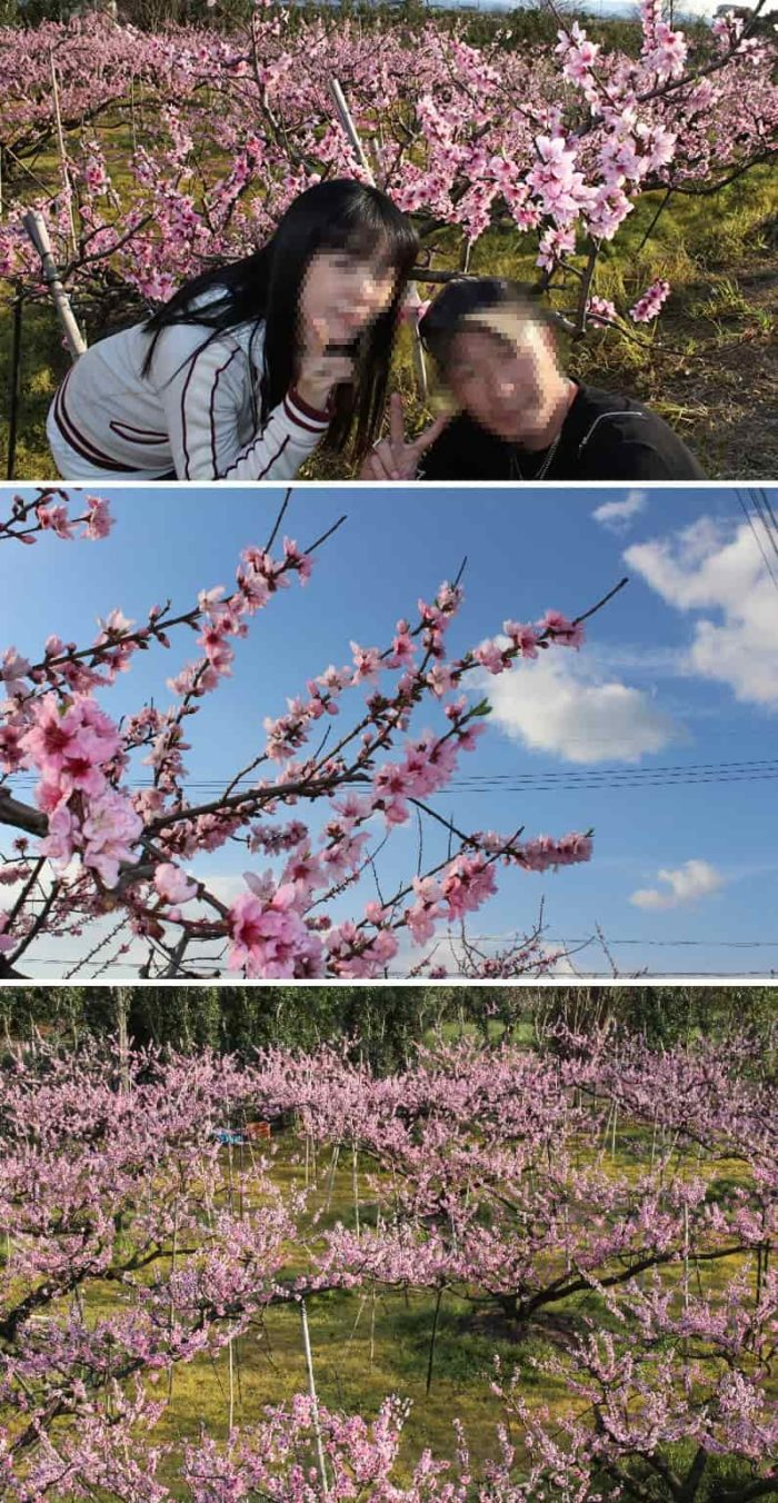 桃源郷と言われる桃畑の景色です。