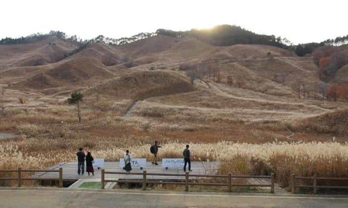 砥峰高原のススキの大草原です。