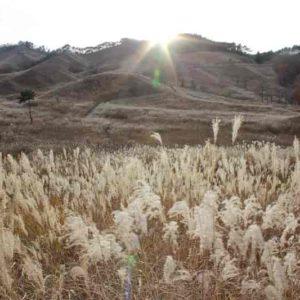 ススキの大群生地「砥峰高原」です。