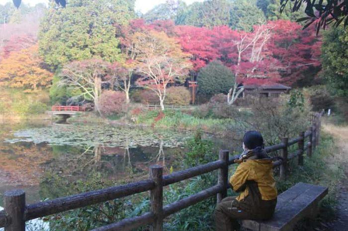 鳥見山公園の勾玉池周辺の紅葉です。