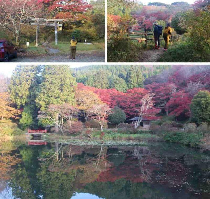 勾玉池周辺の紅葉の様子です。