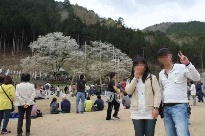 日本三大巨桜の『淡墨桜』です。
