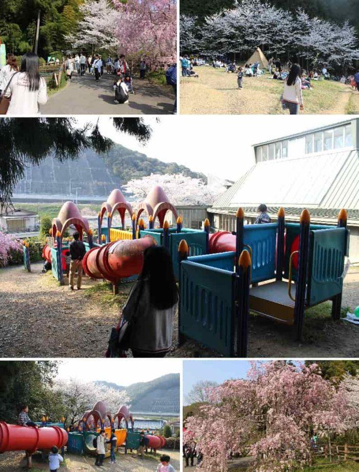 桜が咲き乱れる「展望広場」です。