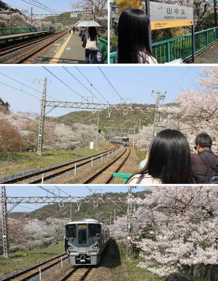 桜並木と電車のコラボ写真です。