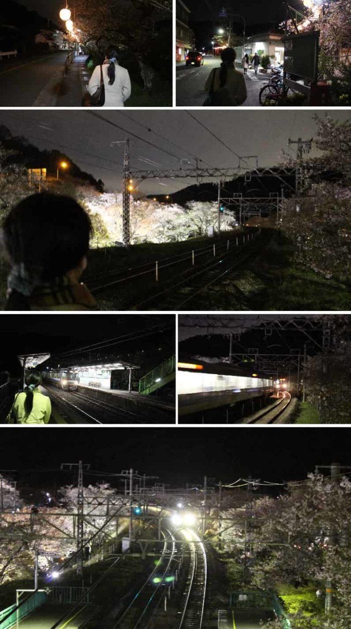 夜間の山中渓駅より望む桜並木と電車です。