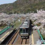 山中渓駅より望む桜並木と電車です。
