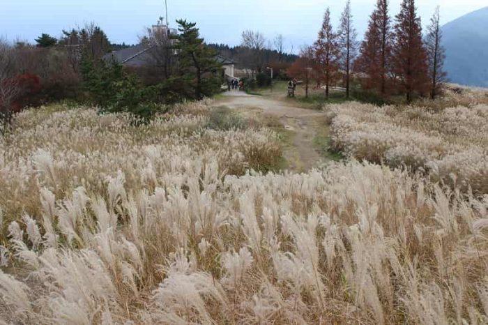 葛城高原に広がるススキの大草原です。
