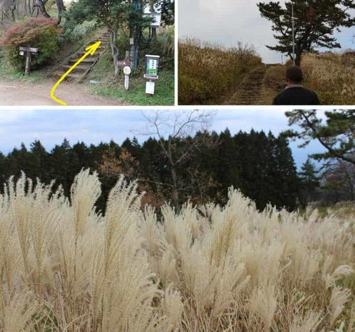 「葛城山山頂」はススキの群生地です。
