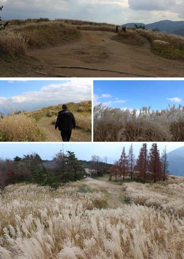 日本有数の「ススキの大群生地」です。