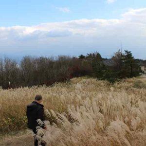 葛城高原に広がるススキの草原です。