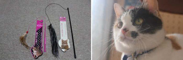 猫じゃらしに興味深々の『よんたま』です。