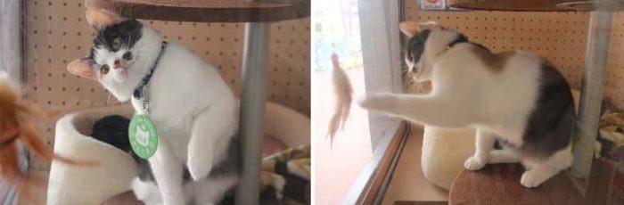 必殺猫パンチを繰り出す『よんたま』です