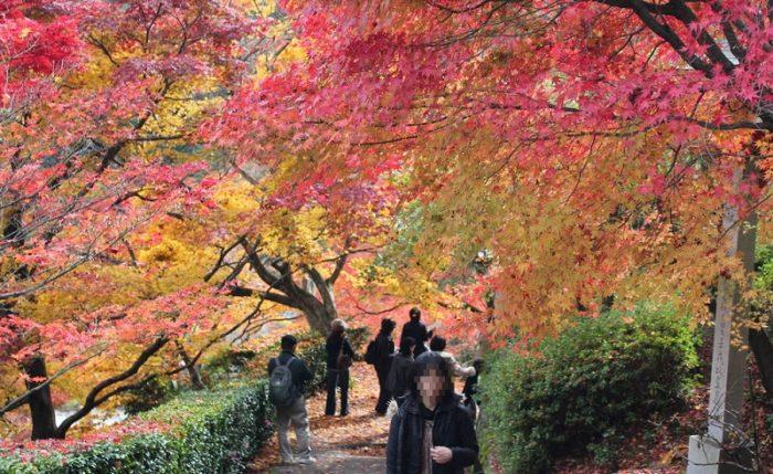 善峯寺の境内に色付く紅葉です。