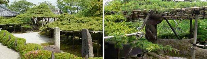 国の天然記念物となる遊龍の松です。