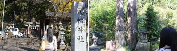 八幡神社の『夫婦杉』で愛を誓います。