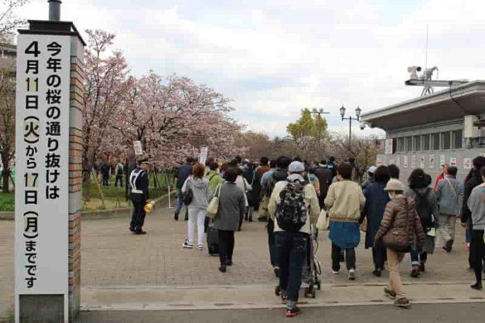 造幣局の『桜の通り抜け』です。